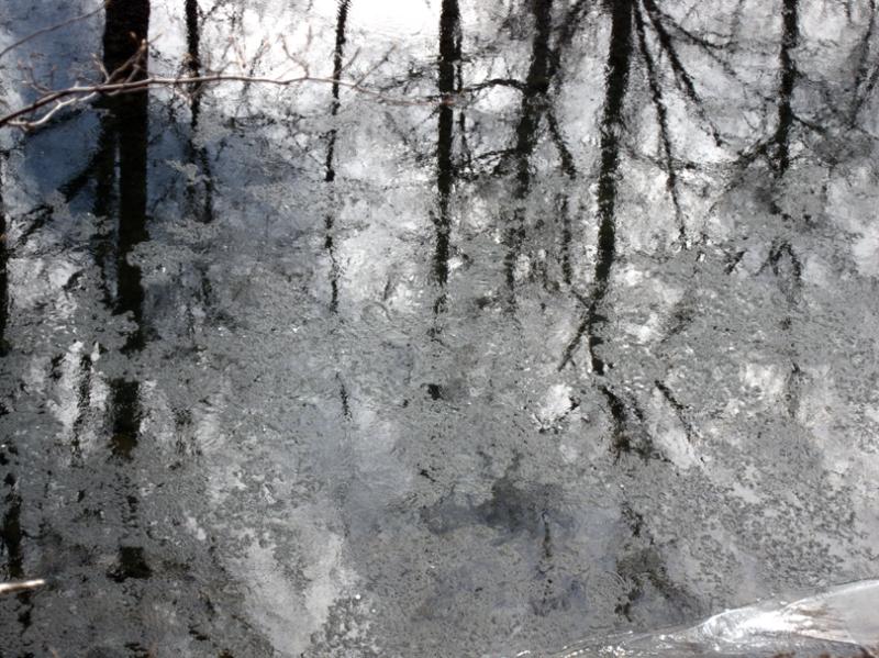 Reflection of trees in frozen creek