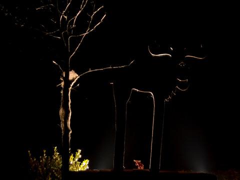 Backlit moose at night