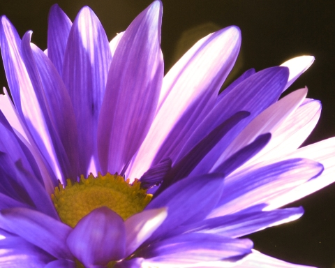 Backlit purple