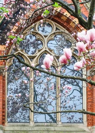 Sage Chapel Magnolias
