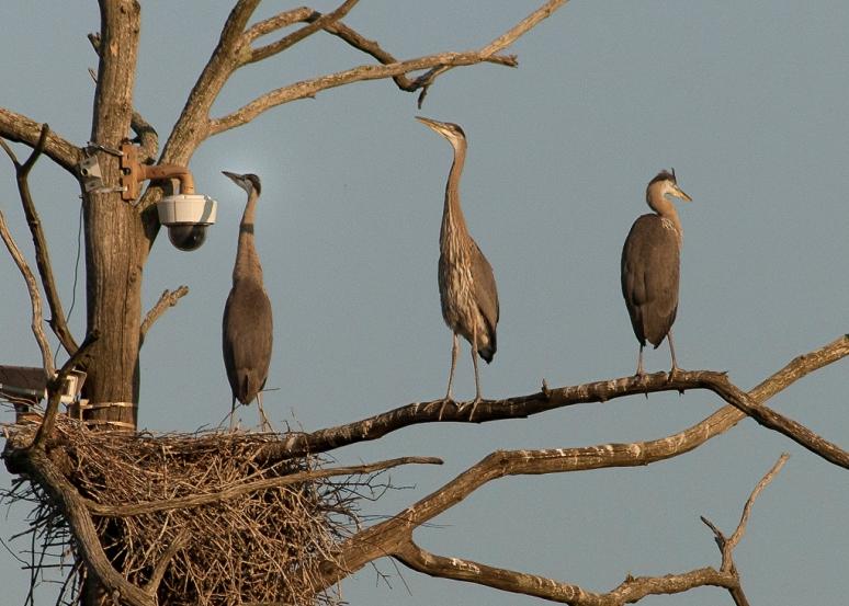 Heron Story 5